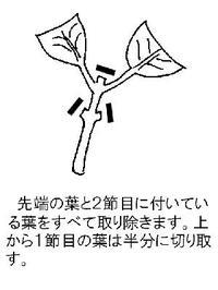 Ajisaisashime2_2