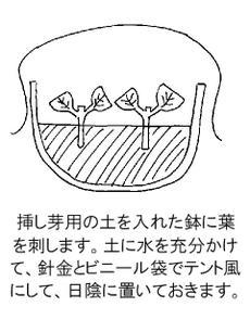 Ajisaisashime3