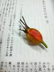 Kuchinashinomi